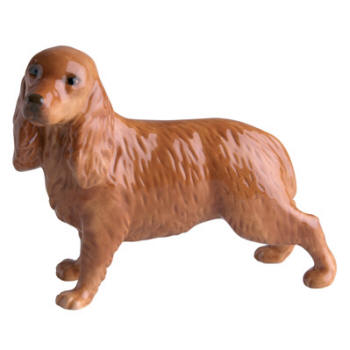 Cocker Spaniel (Golden)